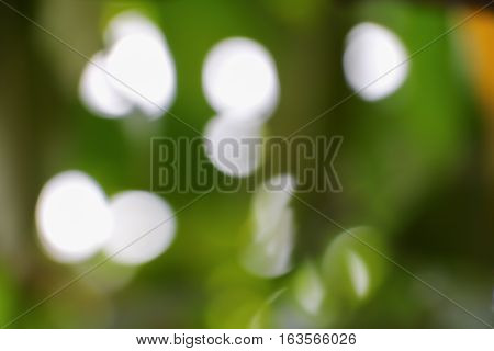 Bokeh abstract natural color warm background with copy space.