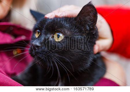 Portrait photo of beautiful friendly black cat