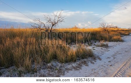 Dry grass in the desert illuminated by the setting sun