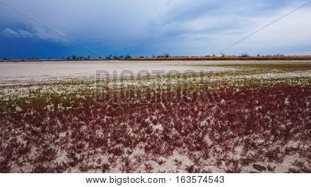 Grass at the bottom of a dried-up lake. Kinburn Spit. Ukraine