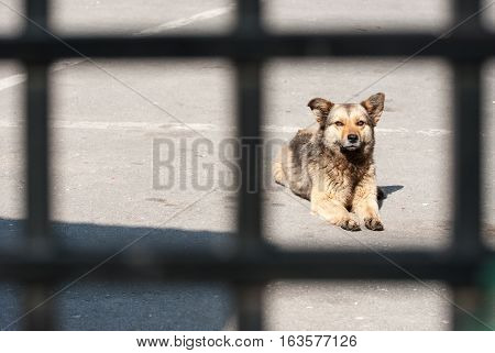 Stray dog behind a fence captivity concept