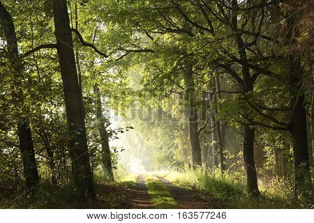 Country road in the morning, early autumn
