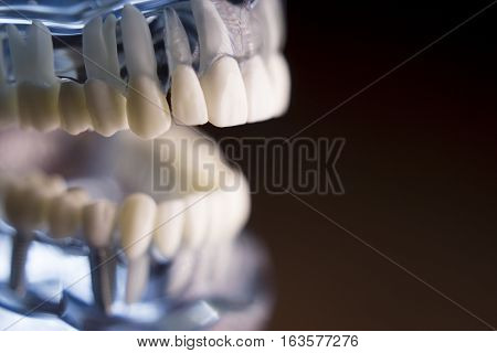 Denture for students on colored background. No people