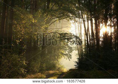Dirt road through the woods at dawn