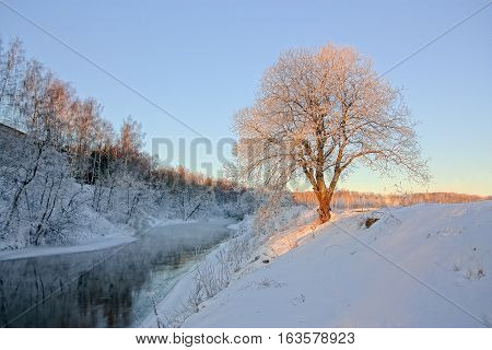 Sunlit tree by the river in winter in the morning