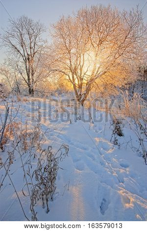 The sun's rays through tree branches in winter in the morning