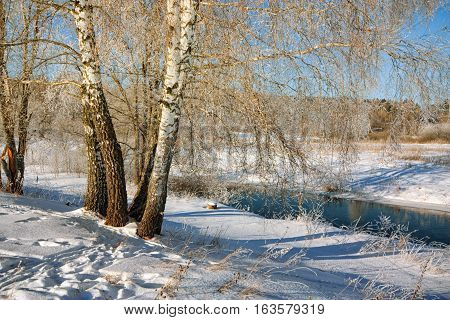 Birch on the bank of winter river in the morning
