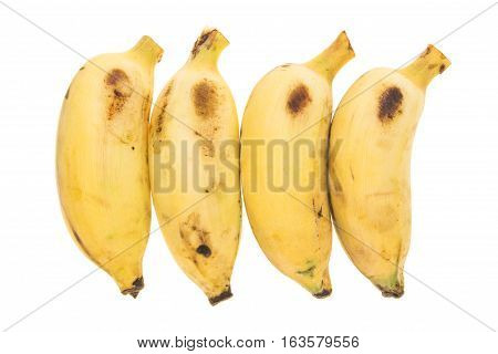 Four Yellow Bananas