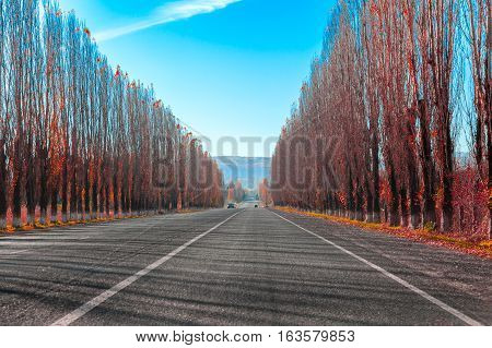 Straight road in mountain highway through the mall red leaves of poplar trees