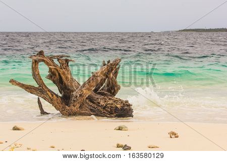 A Timber on the Beach in Maldives