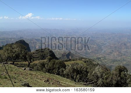 Rainforest in the Simien Mountains of Ethiopia