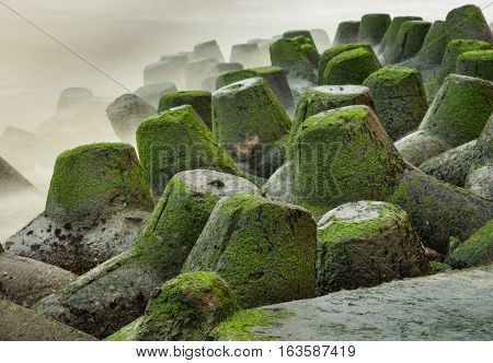 A coastal defence barrier made of tetrapods covered in green moss.