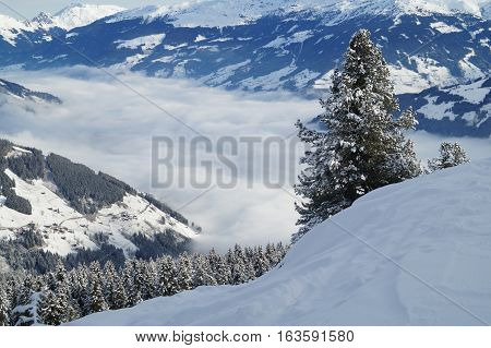 Snowy mountain with forest with a foggy valley completely covered in clouds and a tree in the foreground