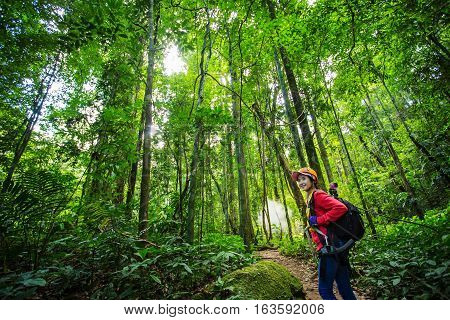 hikers walking in the woods with a rich and mature trees Trekker.