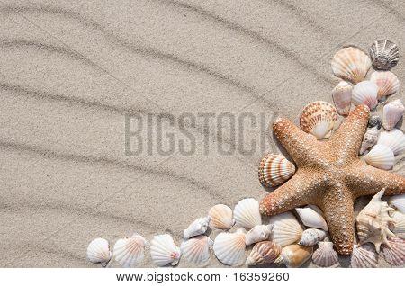 Quadro com muitas conchas diferentes.
