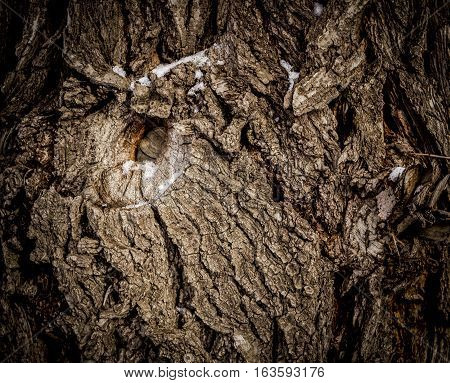Old scabrous wood texture, big old tree, tree texture, wooden background, old tree texture