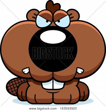 Cartoon Beaver Angry