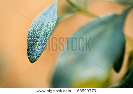white-spotted leaves on plant in forest with orange background