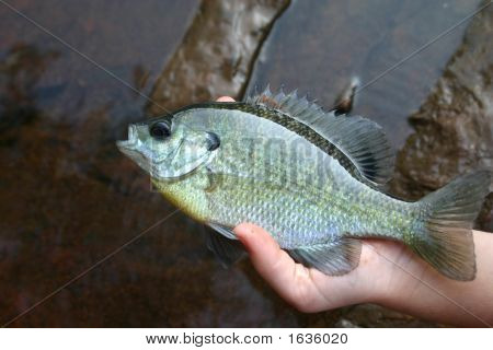 Fish In The Hand Is Worth Two In The Stream