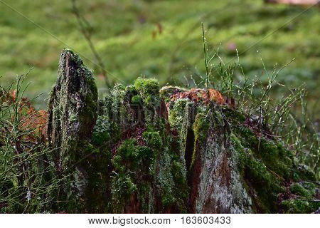primeval forest in Bavarian nature reserve in Germany