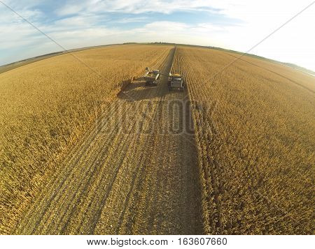 A green tractor and combine harvesting corn in a field.