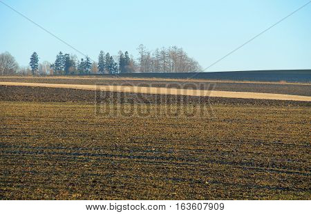 ploughed field with dark and light stripes of various types of soil and plants in autumn