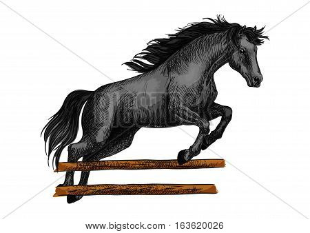 Brown arabian mustang stallion running and jumping over barrier. Color horse vector sketch for equestrian sport racing, horse riding, equine races bets design