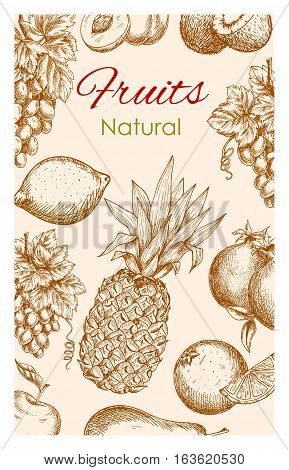 Fruit sketch poster. Natural healthy organic fruit of farm harvest. Vector fresh ripe fruits apple, apricot, pear, tropical pineapple and orange, citrus lemon with grape bunch, pomegranate and exotic banana with kiwi