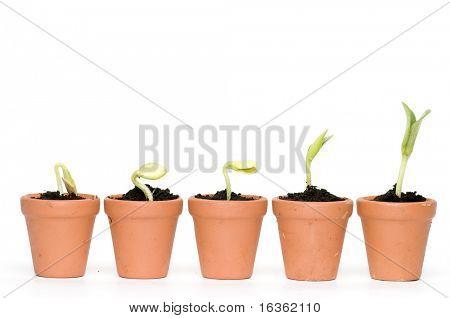 Seedlings development