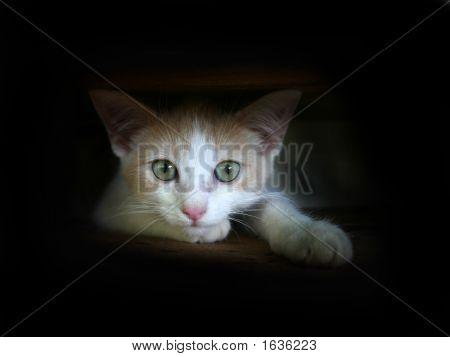 Animal  Cat034A
