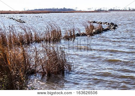 Reeds in marsh in the winter season at Back Bay National Wildlife Refuge in Virginia Beach, Virginia.