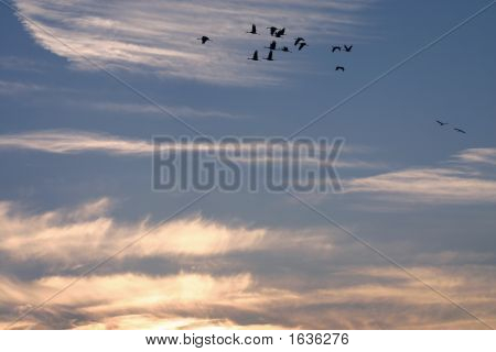 Birds Against The Sunset Color