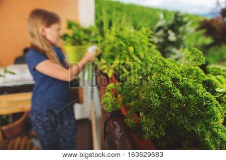 Home grown organic parsley, small balcony garden