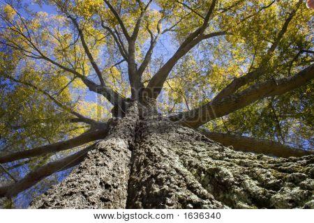 Tree Bigtreenew06_01