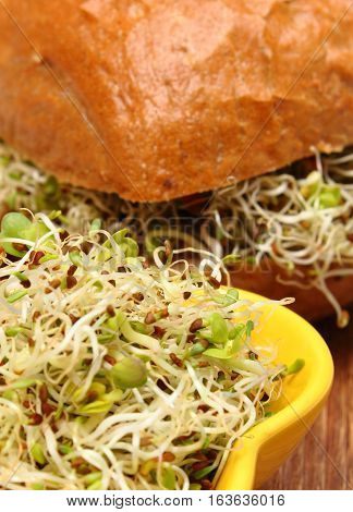 Alfalfa And Radish Sprouts With Wholemeal Bread Roll