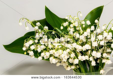 Lily of the valley. Spring flowers. Perfume