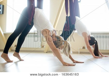 Group of two young beautiful yogi women doing aerial yoga practice in purple hammocks in fitness club. Beautiful females working out. Variation of downward facing dog, adho mukha svanasana in class