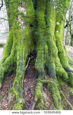 Lichen Moss On Old Tree