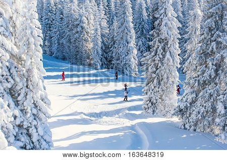 Ski slope at ski resort, people skiing, snow pine trees