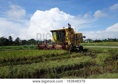 SEKINCHAN MALAYSIA- NOVEMBER 29 2016: Worker uses machine to harvest rice on paddy field in Sekinchan Malaysia. Sekinchan is one of the major rice supplier in Malaysia.