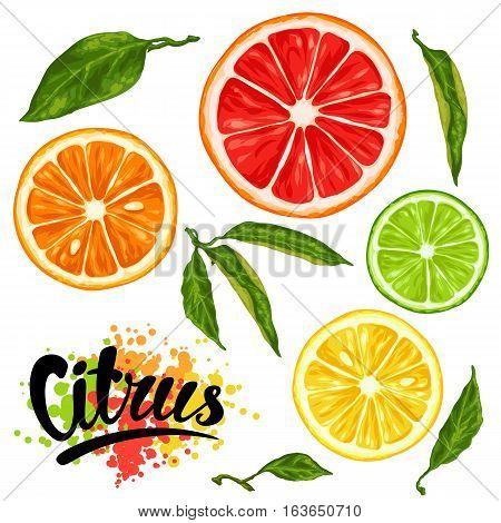 Set with citrus fruits slices. Mix of lemon lime grapefruit and orange.