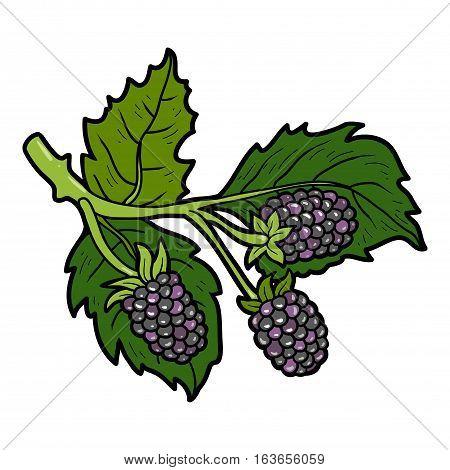 Color image with vector cartoon berry, Blackberries