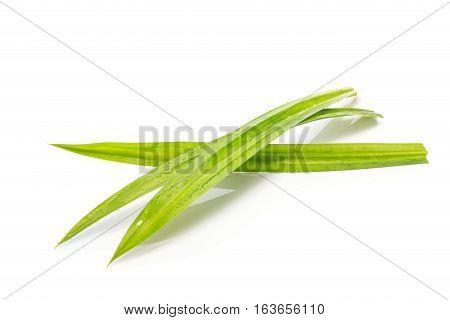 Fresh Green Pandanus Leaf. Studio Shot Isolated On White