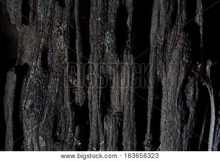 Wood texture background with the concept of mysterious and dangerous feeling