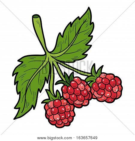 Color image with vector cartoon berry, Raspberry