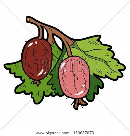 Color image with vector cartoon berry, Gooseberries