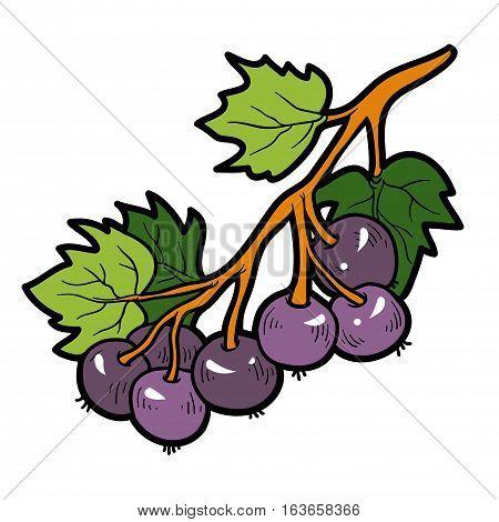 Color image, vector cartoon berry, Black currants
