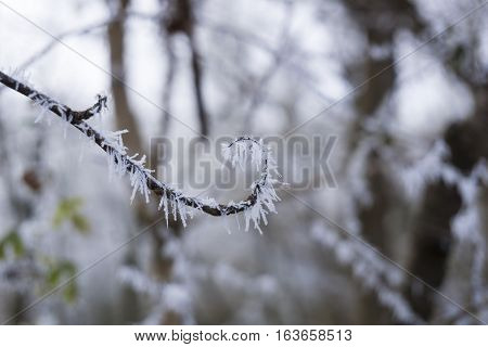 Closeup of frozen Branches in Winter. Frozen Nature