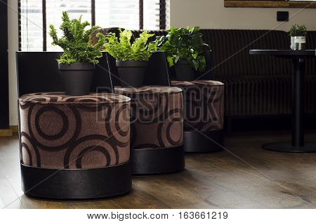 Green plants on brown chairs  in a appartment
