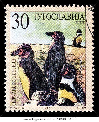 YUGOSLAVIA - CIRCA 2001 : Cancelled postage stamp printed by Yugoslavia, that shows Peru penguins.